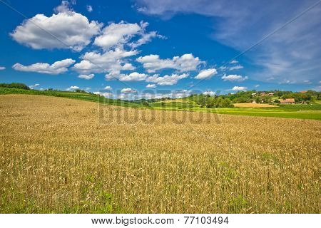 Golden Hay Field In Green Agricultural Landscape