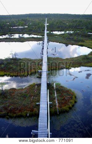 boardwalk through bog