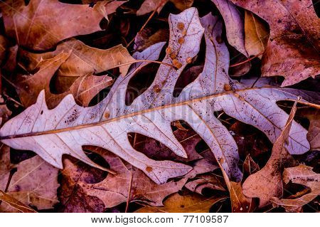 Closeup of Colorful Intricate Fall Foliage.