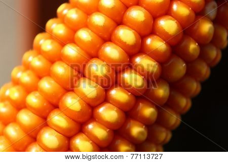Close Up Of Maize Kernel Pattern On Dry Corn Ear