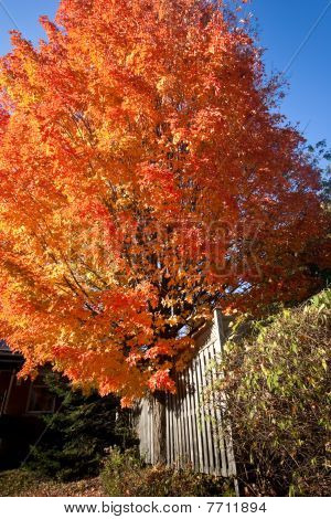 Colorful Tree In The Autumn