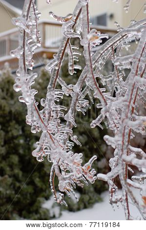 Icy Tree Branch