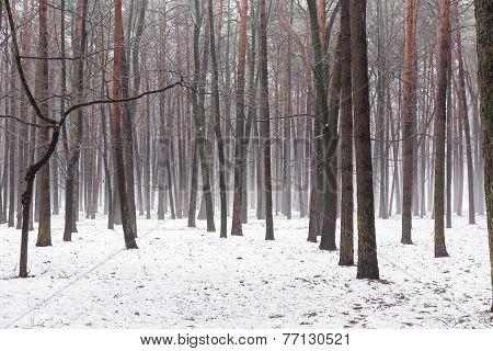 Mist In Winter Forest
