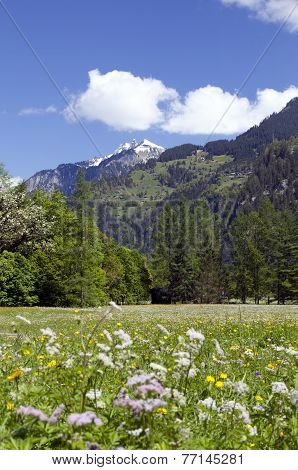 Meadow of flowers in the mountains