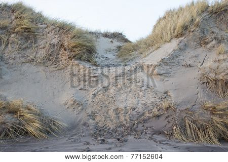 Erosion On A Sand Dune