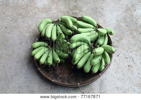 Unripe Banana In Pannier