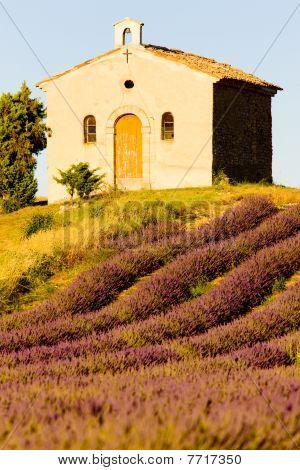 7_004730chapel with lavender field Plateau de Valensole Provence France