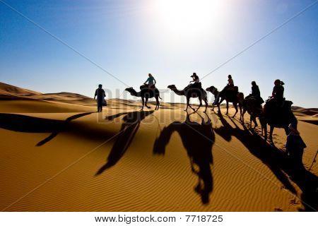 Sahara Camel Caravan