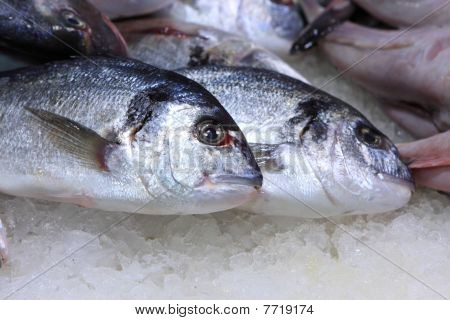 The Sardine On Market