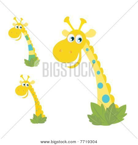 Three yellow giraffe heads isolated on white