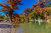 picture of guadalupe  - Cypress Trees with Beautiful Fall Foliage on the River at Guadalupe State Park - JPG
