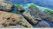 pic of tide  - Seaweed Oysters and rocks at low tide - JPG
