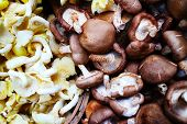 pic of edible mushroom  - 2 types of mushrooms, chestnut mushrooms edible fungus