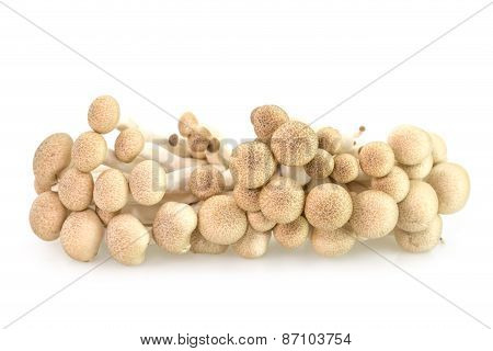 Brown Beech Mushrooms Or Shimeji Mushrooms
