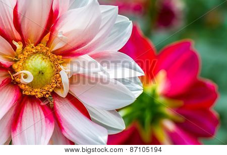 beautiful flower with a bee