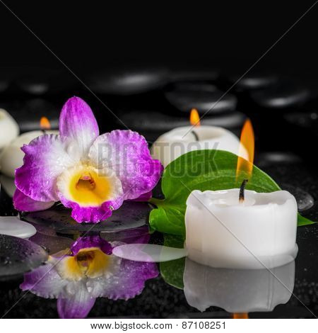 Spa Background Of Purple Orchid Dendrobium, Green Leaf With Dew And Candles On Black Zen Stones In R