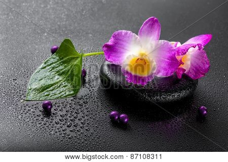 Spa Concept Of Purple Orchid Dendrobium With Dew, Green Leaf And Pearl Beads On Black Zen Stone, Clo