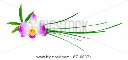 Composition Of Dendrobium Flower And Different Green Leaves Is Isolated On White Background,