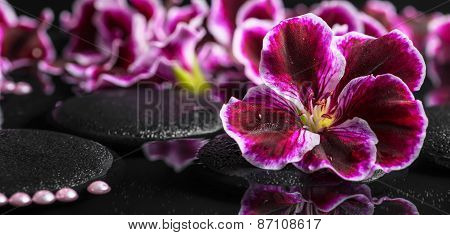 Beautiful Spa Background Of Geranium Flower, Beads And Black Zen Stones With Drops In Reflection Wat