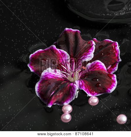 Beautiful Spa Concept Of Geranium Flower, Beads And Black Zen Stones With Drops In Reflection Water,