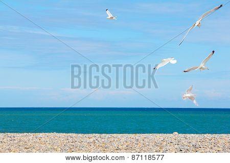 Seagulls Over Pebble Beach
