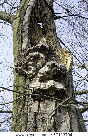 Layered bracket fungi on decaying tree