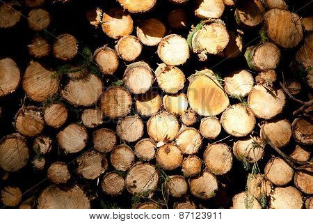 Woodpile In A Forest