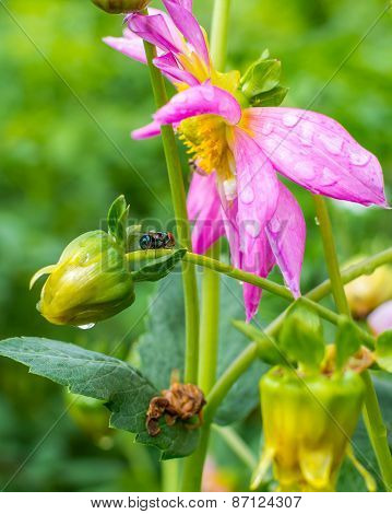 Flower bud and bee