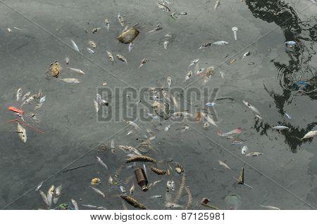 Dead Fish In The Sea