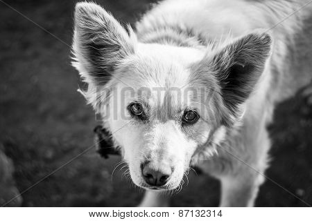 Kindly dog Belka