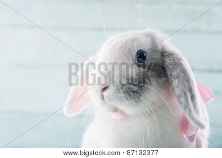 White Soft Bunny Rabbit