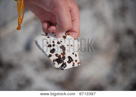 Oil-spattered shell