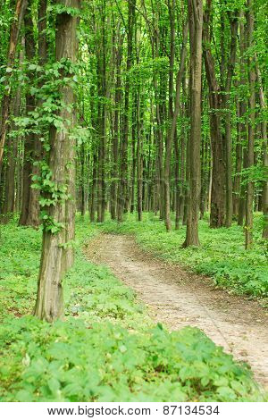 Green Spring Forest With Footpath