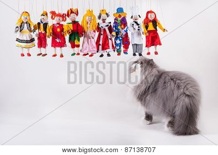 Cute Persian Cat  Playing With Puppets