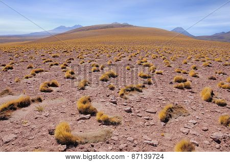Morning Landscape In Atacama Desert.