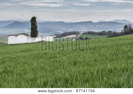 Cemetery In The Field