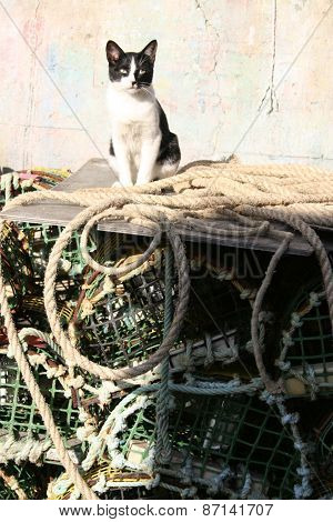 The Fishing Port Cat
