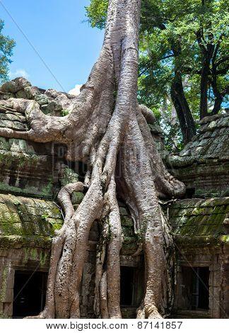 Angkor Wat Detail
