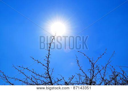 sun scraping 3