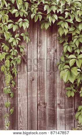 Ivy Frame On Wooden Fance With Instagram Style Filter
