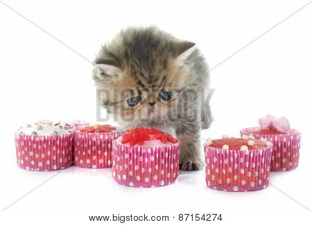 Kitten Exotic Shorthair And Cupcakes
