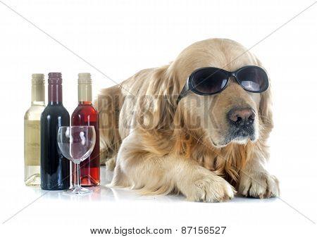 Golden Retriever And Bottle