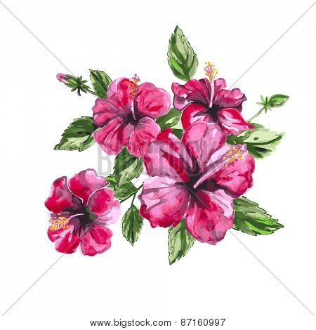 Hibiscus watercolor painting. Isolated vector object.