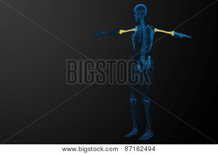 3D Render Medical Illustration Of The Humerus Bone