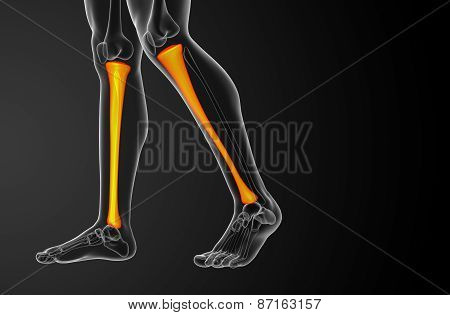 3D Render Medical Illustration Of The Tibia Bone