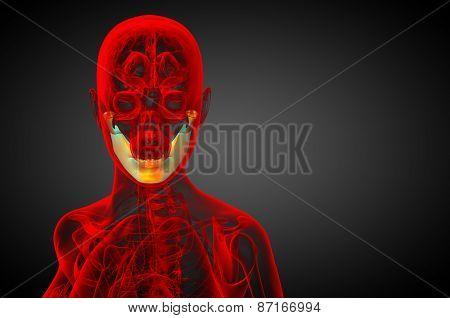 3D Rendered Illustration - Jaw Bone