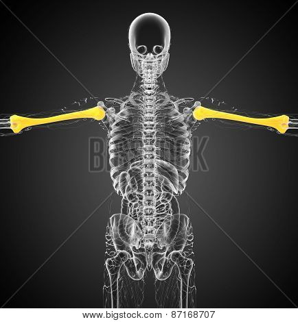 3D Render Medical 3D Illustration Of The Humerus Bone
