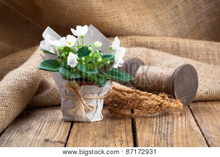 White Saintpaulias Flowers In Paper Packaging, On Sackcloth, Wooden Background
