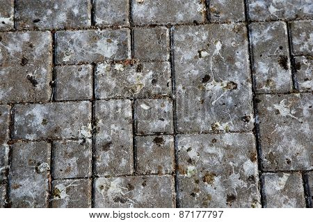 Pattern Of Park Tile With Bird Poop. Texture