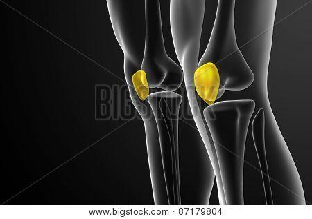 3D Render Medical Illustration Of The Patella Bone